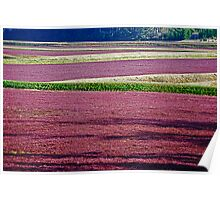 Cranberry Fields Forever Poster
