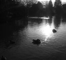 Low Sun and Low Down Ducks by PhotogeniquE IPA