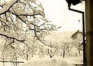 Real Winter in Town by Mojca Savicki