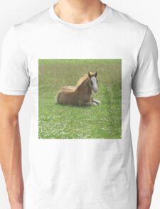 Miss Molly T-Shirt