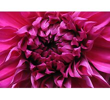 Dahlia Heart Photographic Print