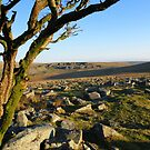 Dartmoor: Looking Towards Foggintor Quarries by Rob Parsons