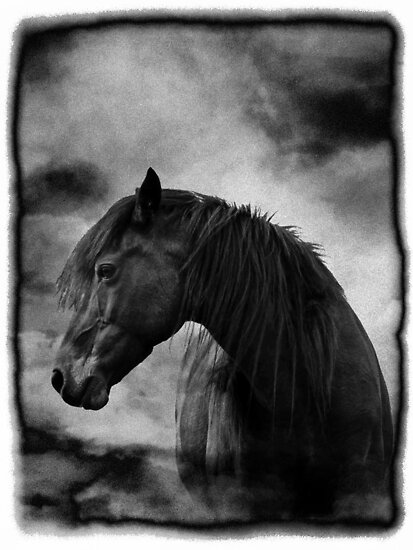 At night I dream of horses by inkedsandra