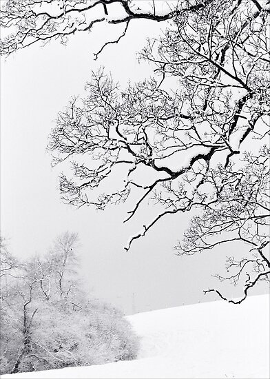 Branches and Snow by Mike Finley
