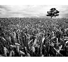 Earn Your Corn Photographic Print