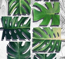 monstera deliciosa by leemo-design