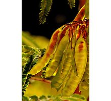 Green Tree Pods - New Growth Photographic Print