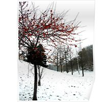 red and snow Poster