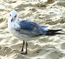 Your Seagull by Betty Mackey