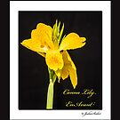 Canna Lily 'En Avant' by jules572