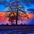 The Winter Tree at Sunrise by Mark Snelling