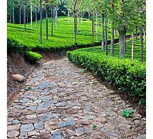 Tea Plantation Road Photographic Print