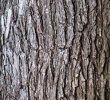 Elm Tree Bark by Sue Robinson
