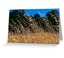 Summer Grass Greeting Card