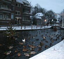 1.2.3.4....There's a little white duck, swimming in by MrJoop