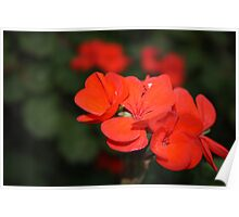 Red Bunch Poster