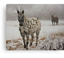 I Spotted This Guy... Canvas Print