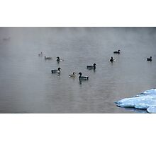 Mallards In The Mist Photographic Print
