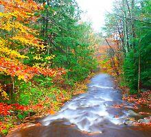 Fall Colors - Sumac Creek by AngelRivera