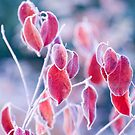Frosted Leaves by Helena Haidner