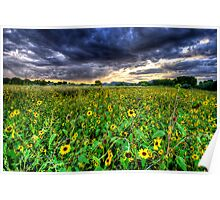 Darkness and Sun...Flowers Poster