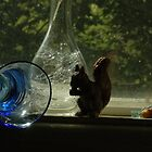 Sqirrel, Bubbles by Helena Haidner