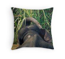 The same elephant Throw Pillow