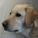 Donna...the bestest guide dog~~ever! by PhotosbyNan