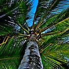 Palm Cove - I by Anthony Wratten