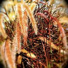 Fair brush field by chrissylong