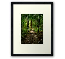 The Hidden Trails of the Old Forests Framed Print