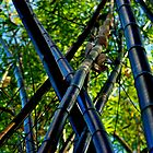 Black Bamboo by Anthony Wratten