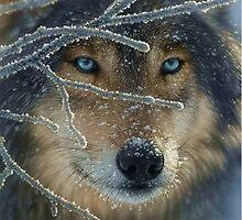 Wolf Eyes by Vitalia