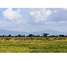 Ostriches Photographic Print