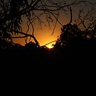 Sunset through the trees by indi09