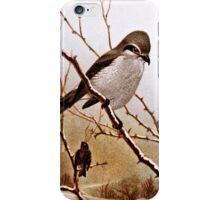Northern Shrike Bird iPhone Case/Skin