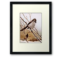 Northern Shrike Bird Framed Print