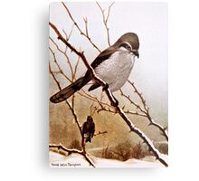 Northern Shrike Bird Metal Print