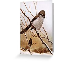 Northern Shrike Bird Greeting Card