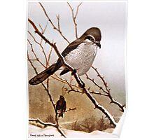 Northern Shrike Bird Poster