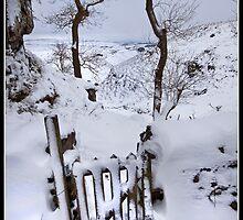 Walking in a winter wonderland by Shaun Whiteman