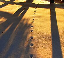Tracks to the Sun by Julie Everhart