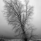 2009 Colorado Winter 012 by greg1701
