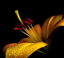 Lovely Lily. by Vitta