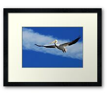 Another Day at the Cape Framed Print