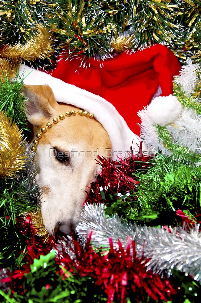 A dog is for life, not just Christmas by Desmond  Brambley