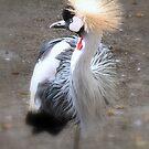 Crowned Crane by Sviatlana
