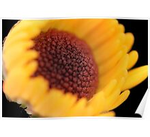 Flower: Yellow Chrysanthemum Poster