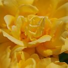 Yellow Beauty by Jacinthe Brault