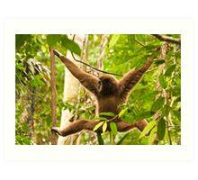 White-handed Gibbon Art Print